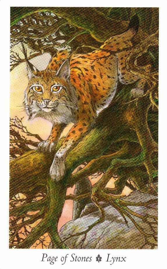 Паж Камней Таро Дикого Леса - The Wildwood Taro